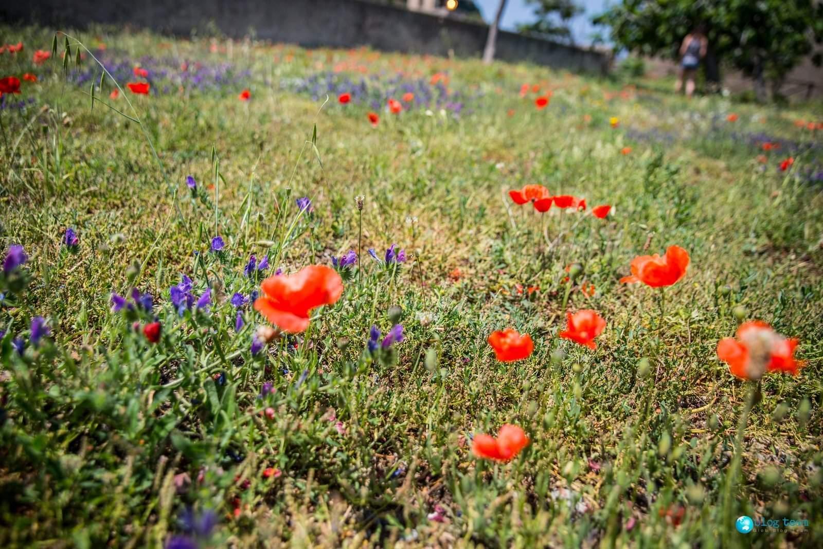Ładne kwiatki przy willi Napoleona