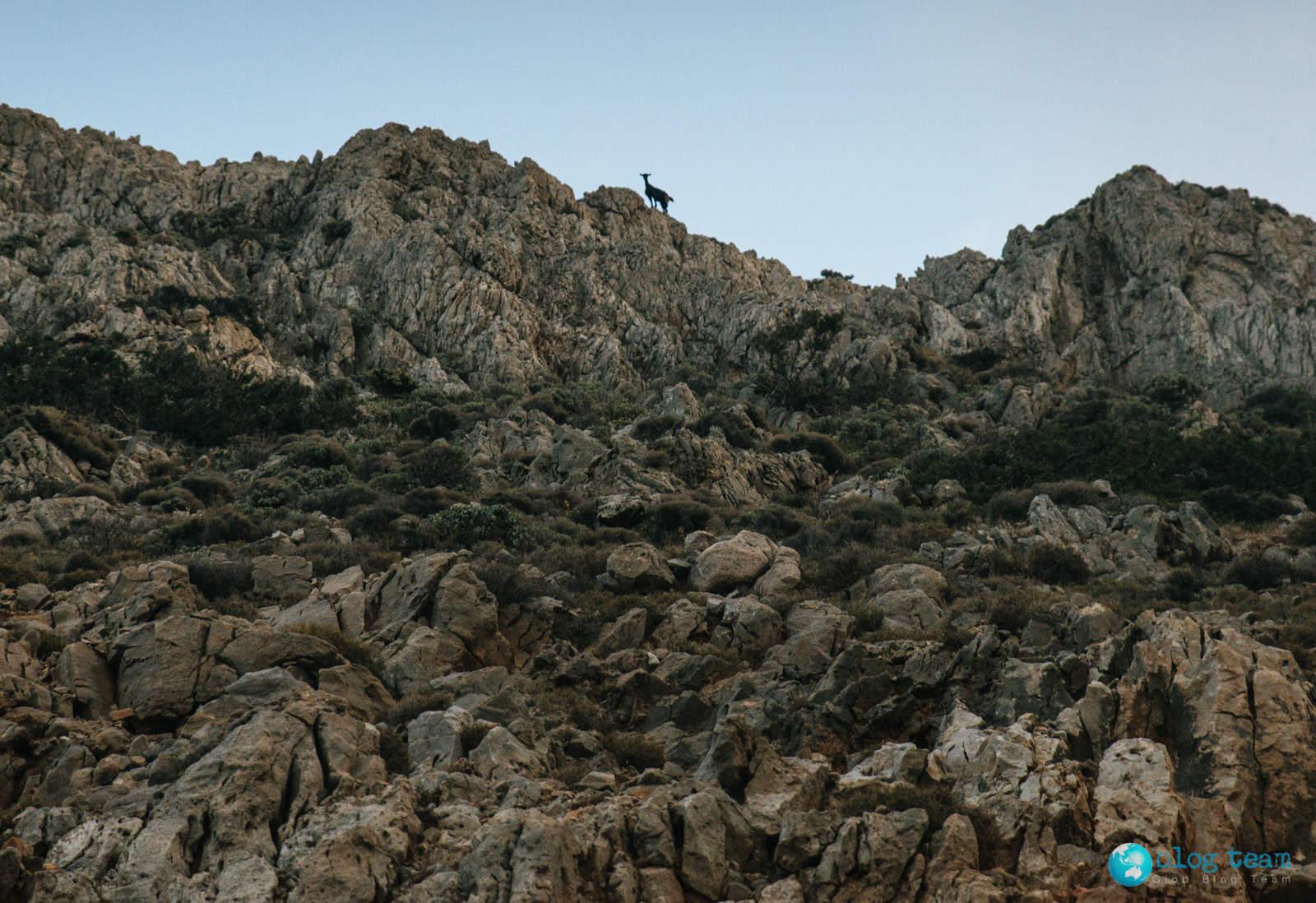 Koza na skale
