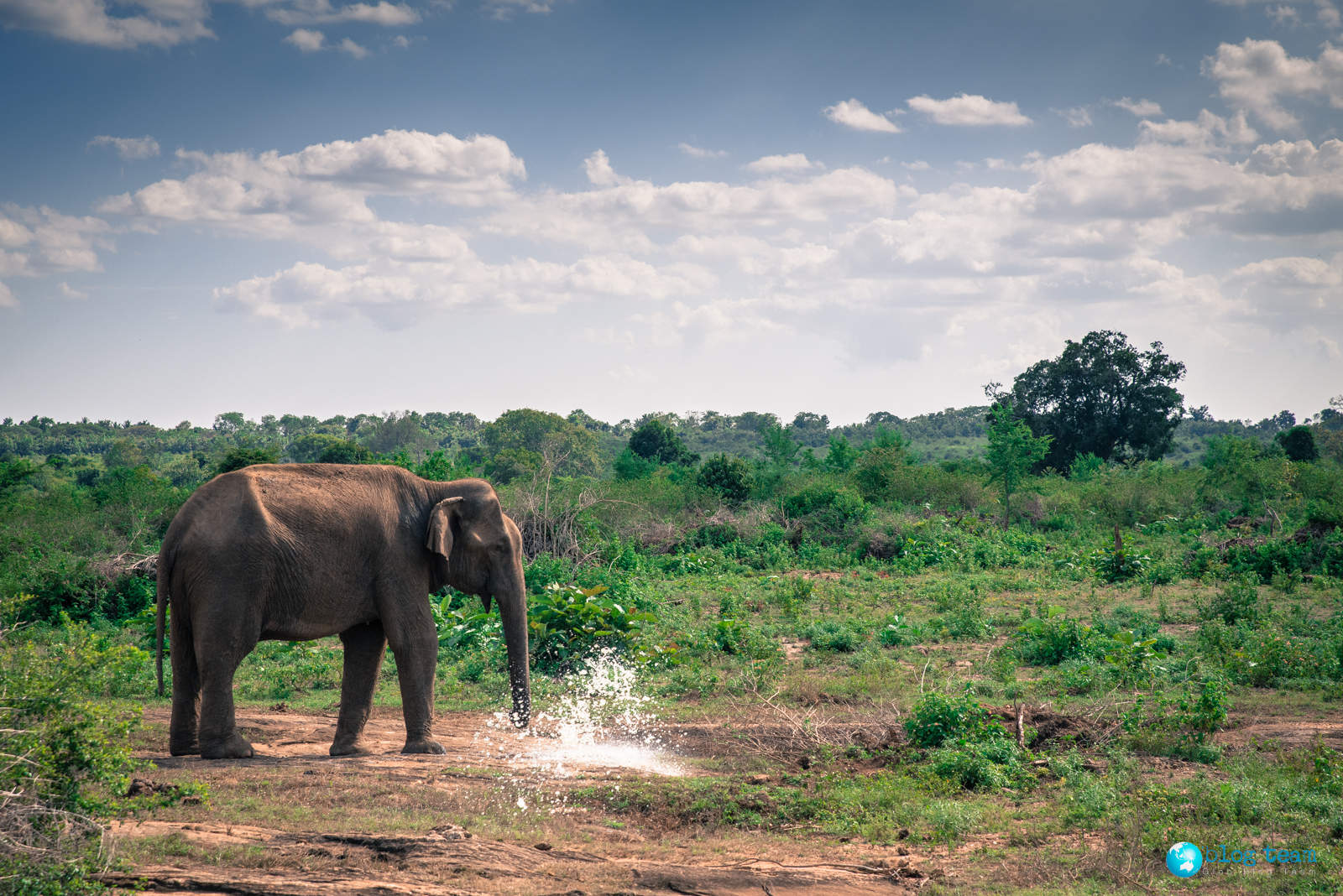 Safari Udawalawe National Park