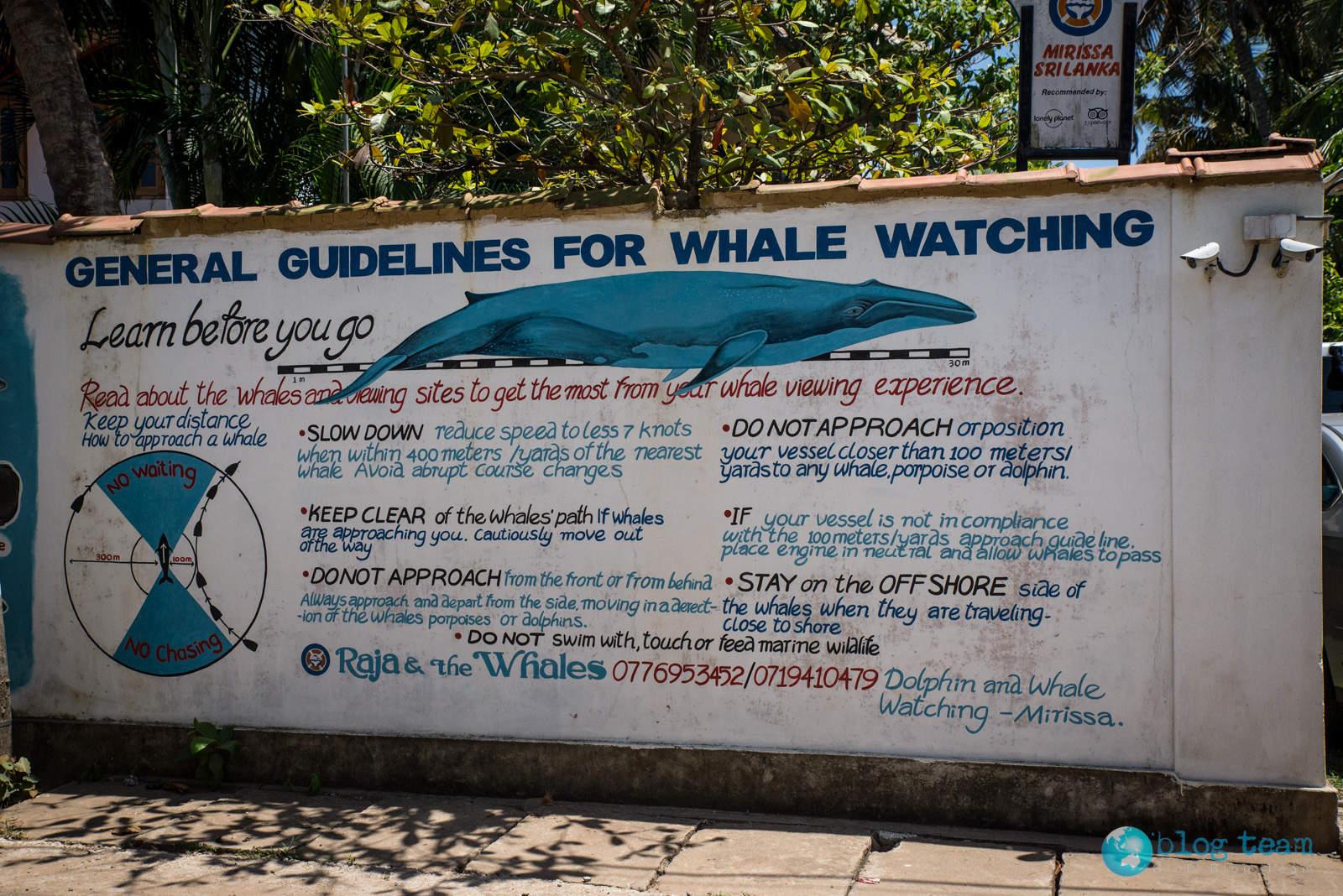 Oglądanie wielorybów w Mirissie