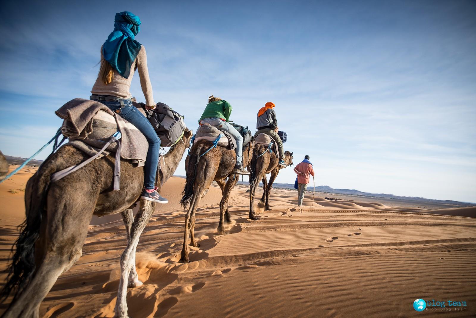 Wielbłądy - karawana na pustyni